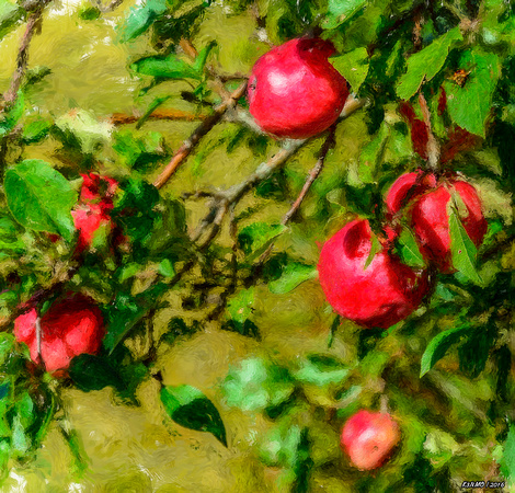 Late Summer Apples